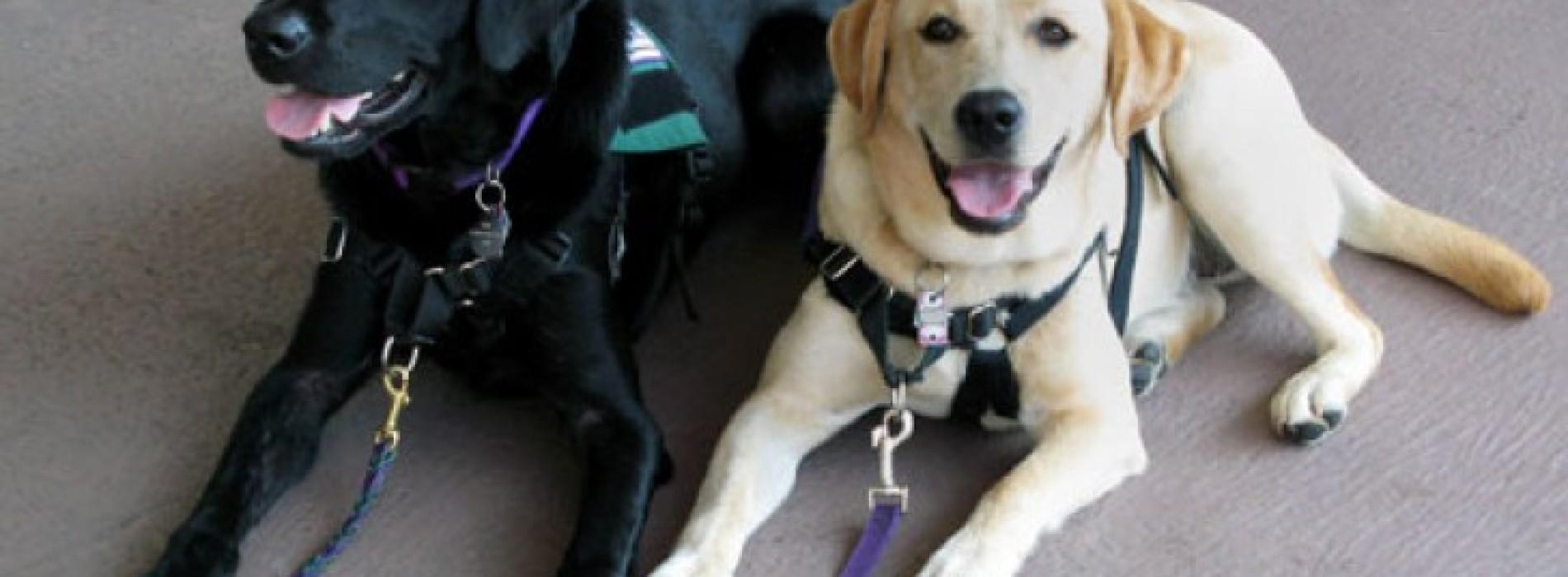 Service dogs: mans' best friend