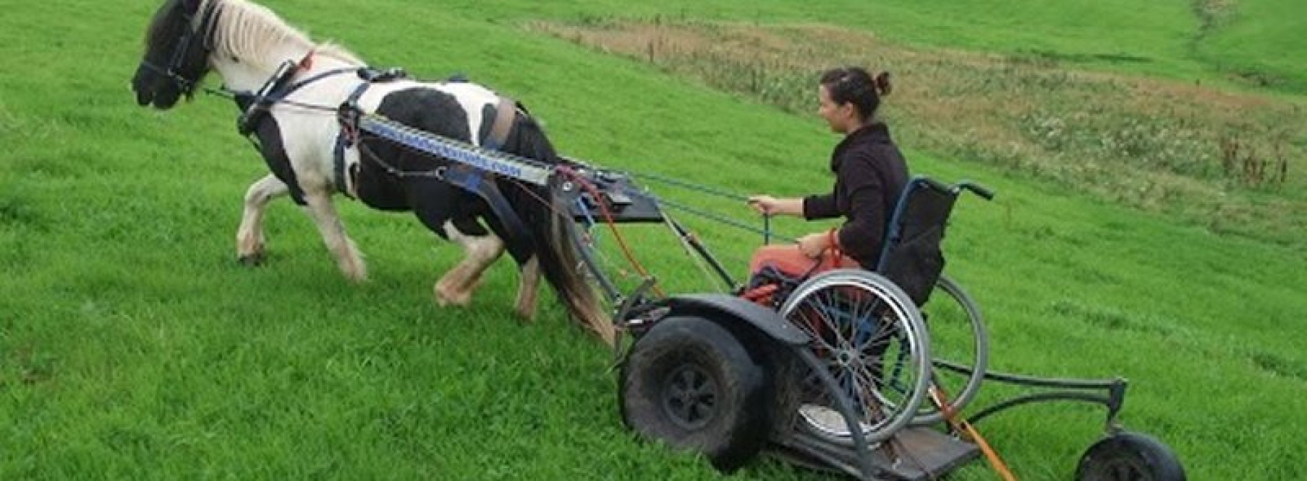 Pony Access: making horses part of disabled people's lives