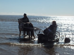 Pony Access in water on beach