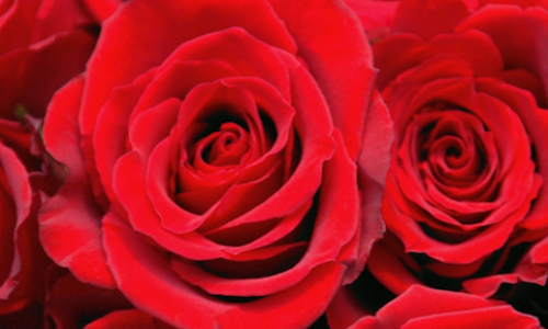 Top tips for an accessible and budget-friendly Valentine's Day