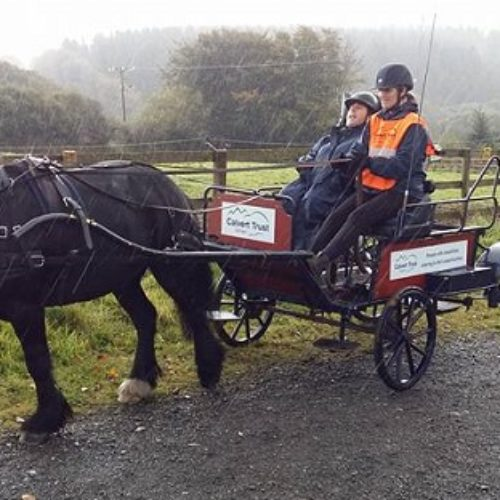 Accessible activity: my wonderful horse and carriage experience in Devon