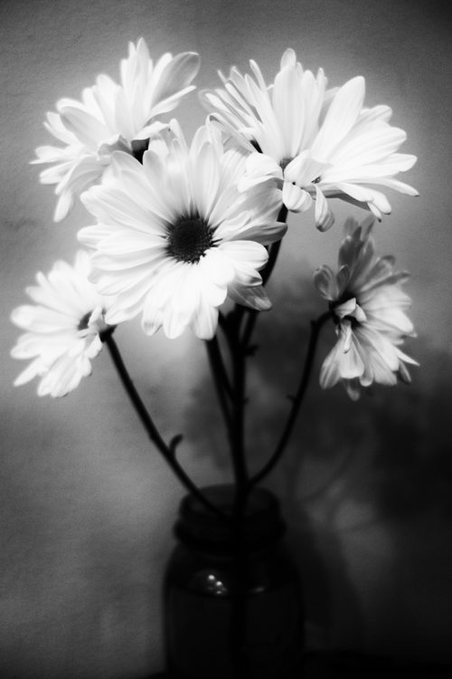 Black and white flowers by blind photographer