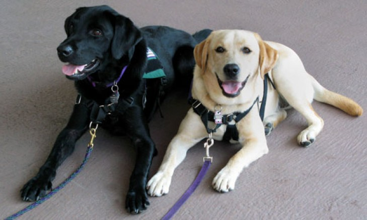 Photo of Service dogs: mans' best friend