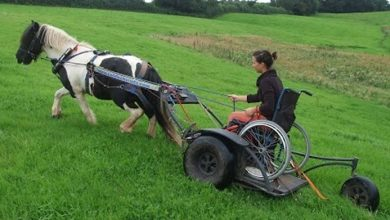 Photo of Pony Access: making horses part of disabled people's lives