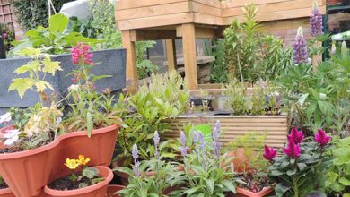 Photo of Top tips for disabled gardeners