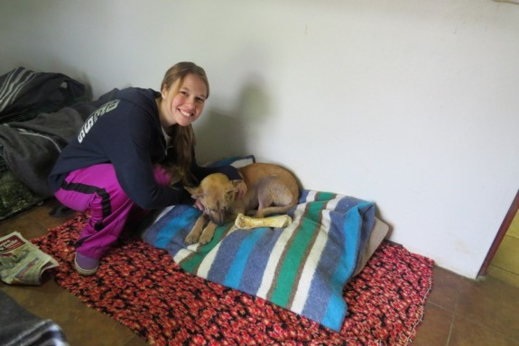 Volunteering in Africa at an animal shelter