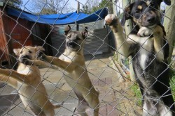 Volunteering in Africa - dogs in an animal shelter