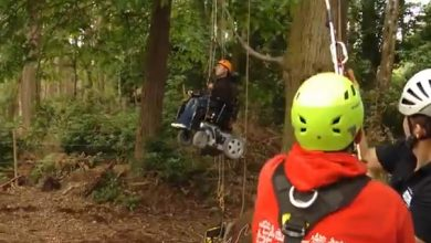 Photo of Access All Areas: accessible activities in the New Forest