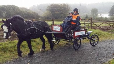 Photo of Accessible activity: my wonderful horse and carriage experience in Devon