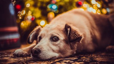 Photo of Christmas through the eyes of someone with Asperger's Syndrome