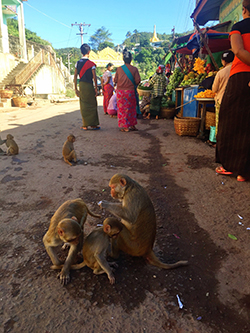 Mountain monkeys in Burma