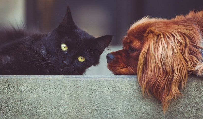 Cat and dog lying on floor at home