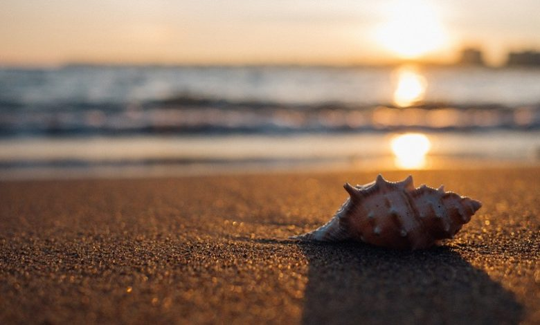 Shell on a sandy beach at sunset