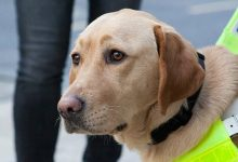 Photo of Study shows assistance dogs improve the mental health of disabled young people