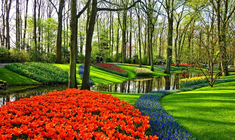 Keukenhof with colourful tulips Holland