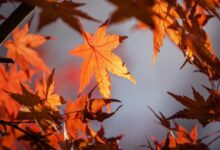 Photo of Gardening jobs for autumn: top tips if you're disabled