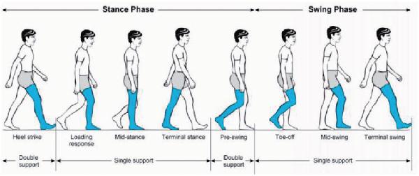Human gait cycle diagram